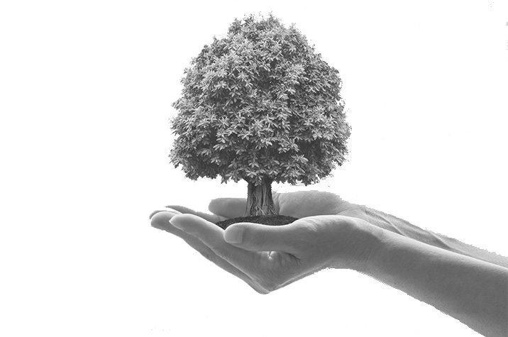 Miljö Och Kvalitet - Stadsbudet
